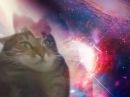 Кот проходит Махсом