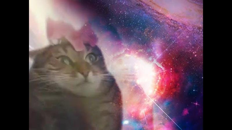 Кот познавший все сущее