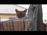РЖАКА_ Неудачный паркур кота