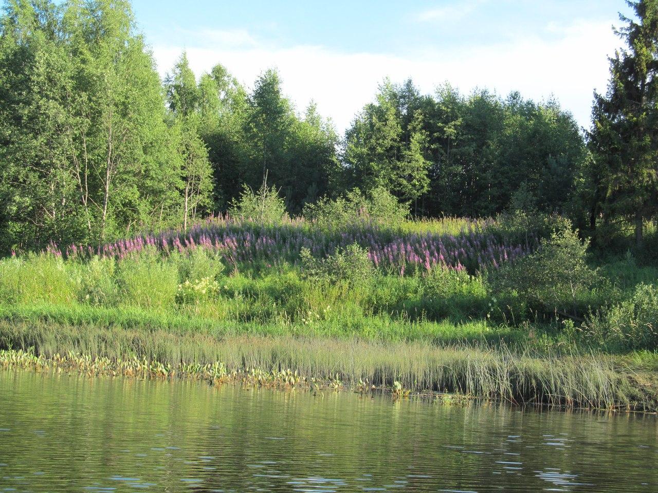 берег, заросший травой и цветами