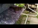 Кот Миха катается на качелях