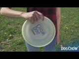 Akademia Dog Chow odc. 7 Floater