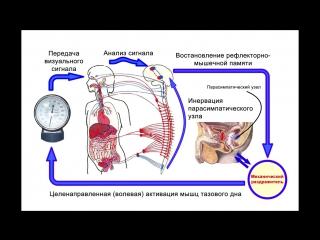 Как проводится ректальное узи предстательной железы