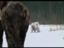 Сериал BBC Прогулки с чудовищами Walking with Beasts смотреть онлайн бесплатно 6
