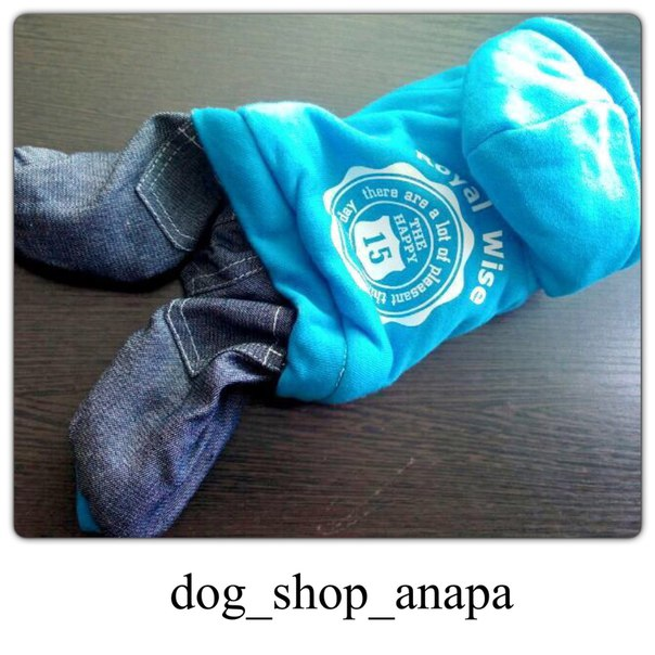 Интернет магазин одежды для собак GOhf22y0v8I