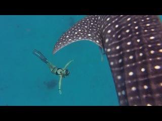 Девушка в бикини плавает с акулой
