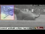 В Индии дикие слоны затоптали пять человек (20.03.2016)