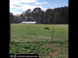 Хозяин готовит сюрприз любителям подразнить собаку через забор