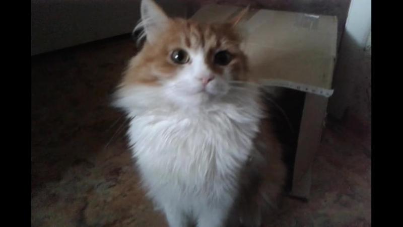 Антистресс: игры с котом