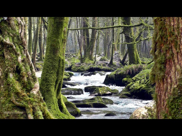 Relaxing Gentle Waterfall - Beautiful Bird, Nature Sounds of the Forest Relaxation