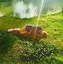 Shevchenko Love фото #34
