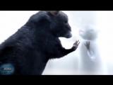 Короткометражный Мультфильм | История одной крысы