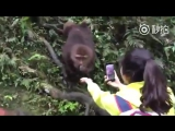 Oh Monkey, it does you no good to rob a cellphone from the hands that feed you