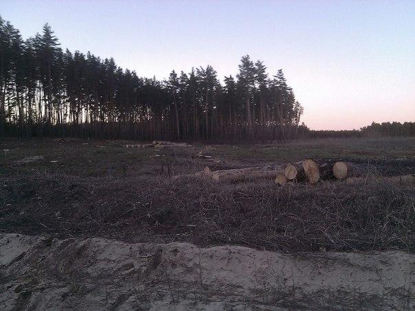 На Харьковщине уничтожают лес (ФОТО, ВИДЕО)