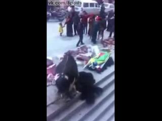 Корова на мясном рынке оплакивает смерть сородича / A COW GRIEVING THE DEATH OF A FAMILY MEMBER (read below)