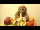 Смешные котики необычная одежда для кошек Ярмарка Мастеров