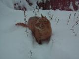 Кот и снег.