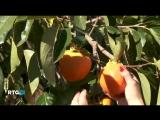 Агротуризм на юге России 2013 (фильм RTG)