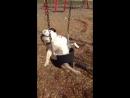 Собака на качелях_n