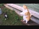 Русские коты