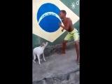 Cachorro Dançando No Passinho