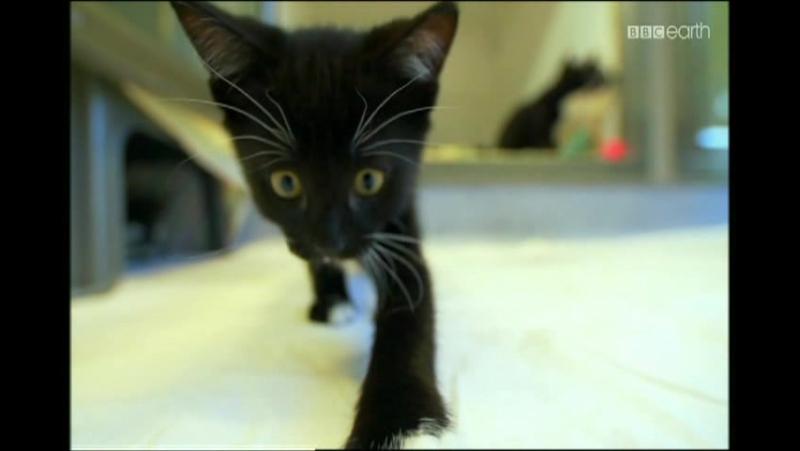 Koty bez tajemnic odc.2 – Lew na kolanach