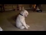 Пёс тащится от блюза