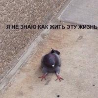 Игорь Крамарский |