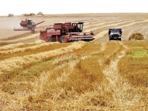 Завершено збирання ранніх зернових та зернобобових по сільськогосподарських підприємствах району