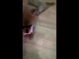 Как реагирует моя собака на деньги :D