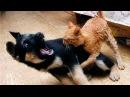 Кошки и собаки видео приколы смотреть приколы про кошек и собак!