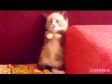 Коты, известные на весь интернет