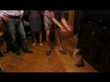 Цирк дрессированного кота