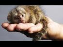 Самые маленькие животные в мире.