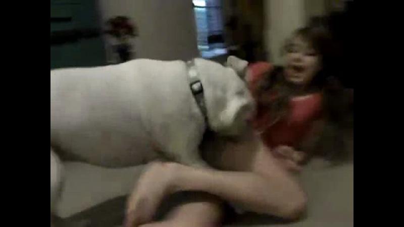 Собака насилует девушку