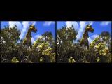 PANGEA - Adventures of Rexy the little T-Rex (3D)