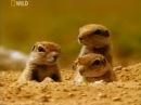 Очень интересный документальный фильм   Дикая Пустыня Африки  Животный мир Африки