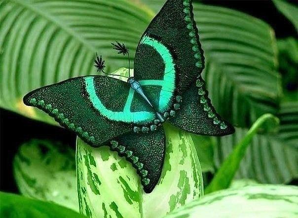 Бабочка с символом мира.