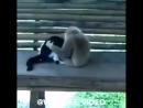 обезьянка дружится с котом)