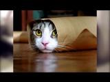 Топ 10 смешных котиков 2015