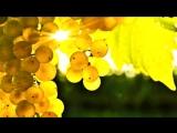 «Творение Иеговы-Осень.» под музыку Евгений Дога - Осенний вальс (К/ф