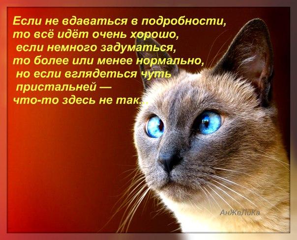https://pp.vk.me/c633816/v633816874/e0ba/-DYy18OIcFs.jpg