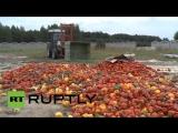 ТЫСЯЧИ ЕВРО ПОТЕРЬ... Ежедневно польские фермеры теряют тысячи евро из за санкций России