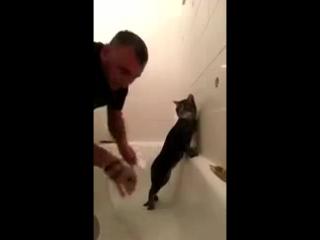 Самый терпеливый кот в мире