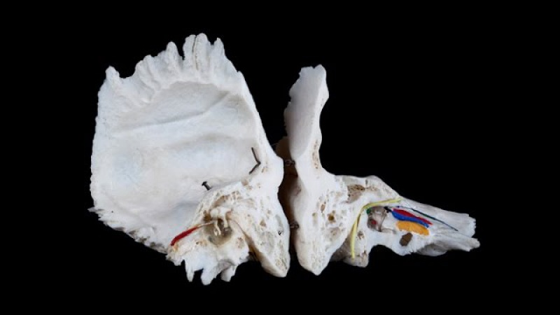 Каналы височной кости. Лекция по анатомии.