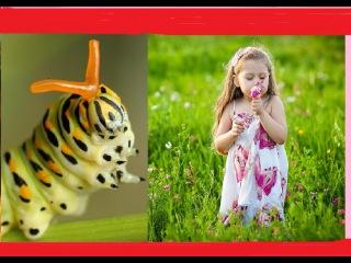 Честное гусеничное! Детское видео - мультик сказка от Кати не Беби Бон. Baby Born story