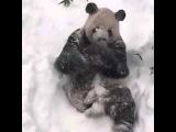 Панда в национальном парке США пришла в восторг от снежной бури.
