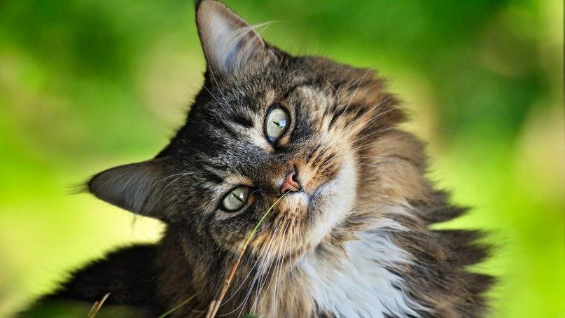 Картинки по запросу всемирный день кошек 2017