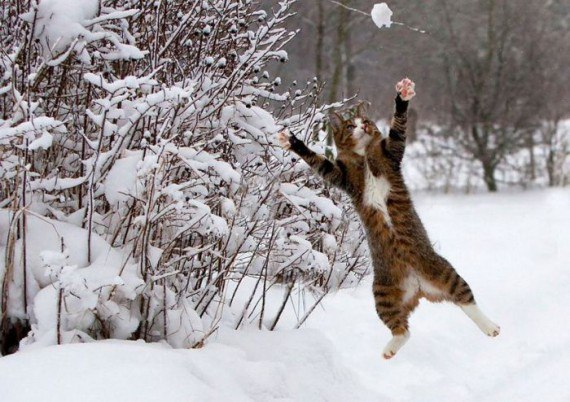 Кот играет в снежки