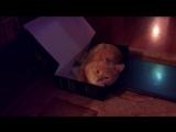 Кот в коробке из под видки